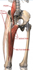 Muscles around pelvis
