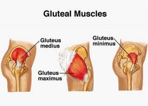 gluteal muscles