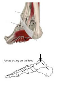 foot mid section