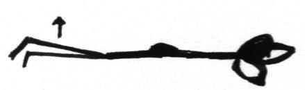 partial shalabasana