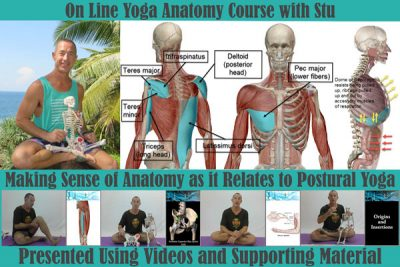 yoga anatomy foundation course